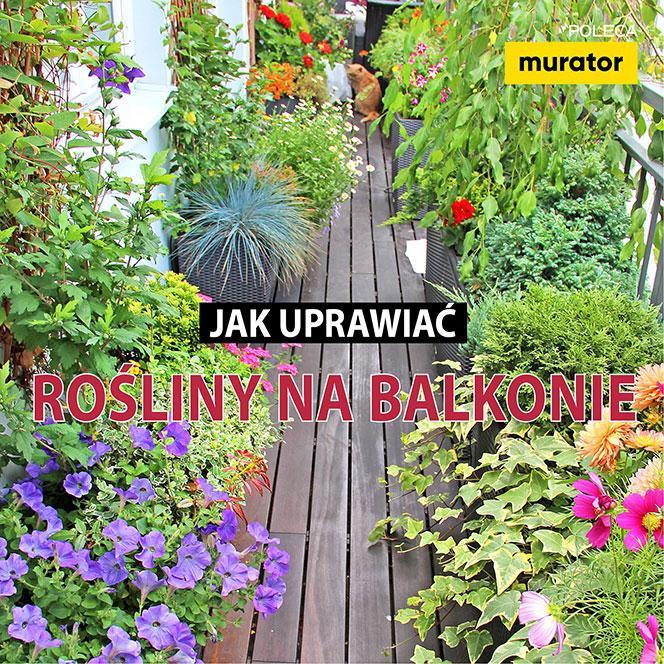 Jak uprawiać rośliny na balkonie